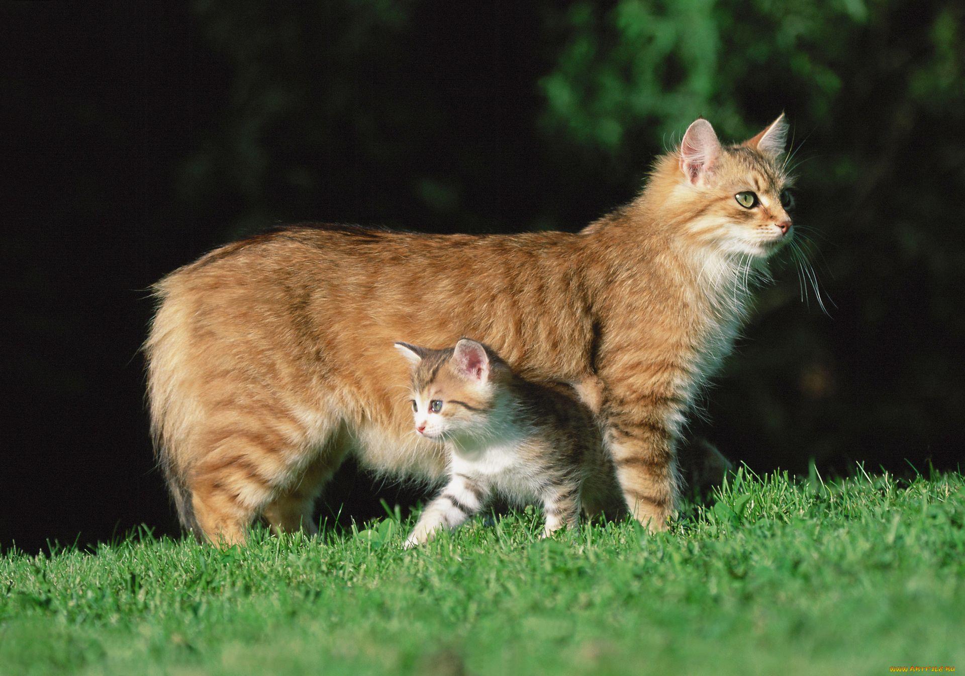 Картинки домашних животных кот